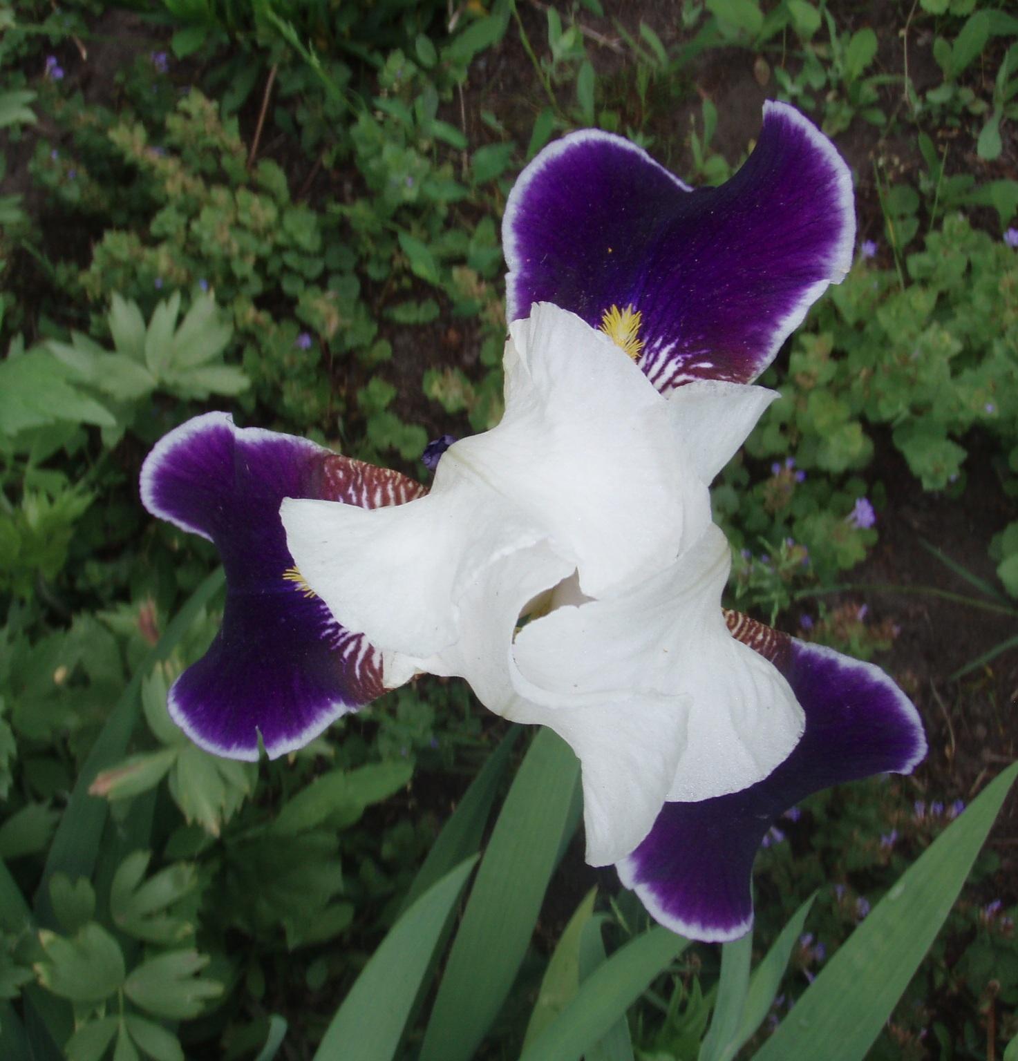 Эротические фото цветы считаю